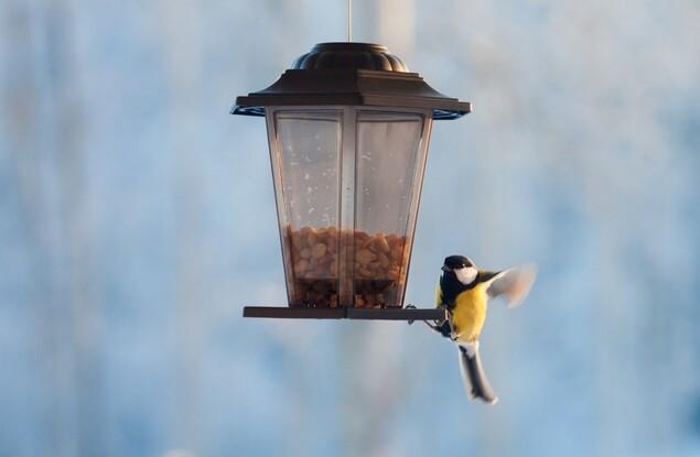 Unsere Gartenvögel: Die zehn größten Irrtümer