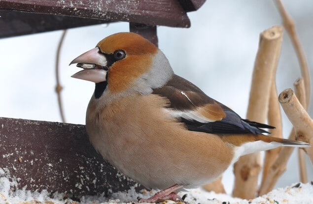 Vogelhäuschen oder Futtersäule?
